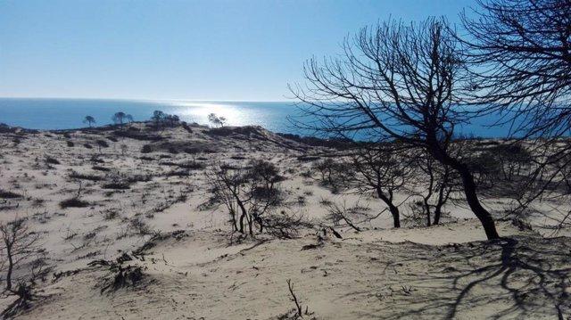 Zona afectada por el incendio en Doñana en el verano de 2017