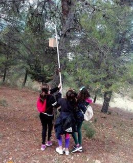 Escolares colocan 160 cajas nido para ave insectívoras en el entorno del Caminito del Rey
