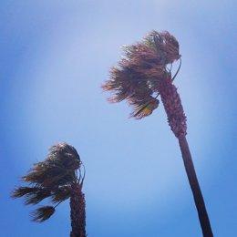 Palmeras azotadas por el viento en el paseo marítimo de Almería