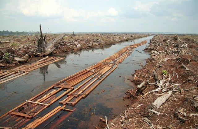 La pérdida de biodiversidad puede ser aún peor de lo estimado