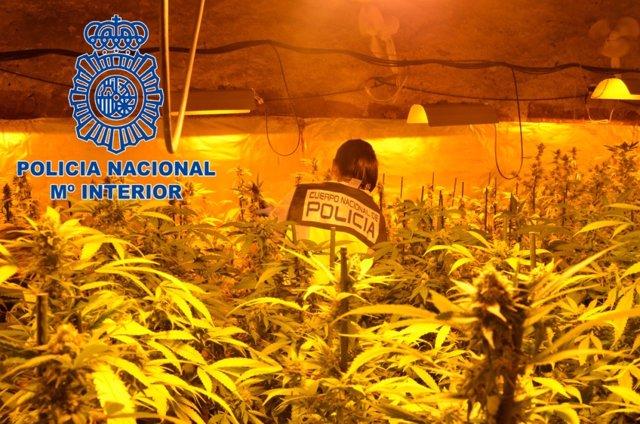 La Policía Nacional detiene a una banda que cultivaba marihuana y la vendía en un club cannábico de Barcelona