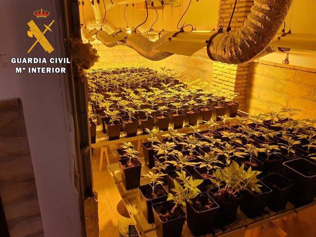 Imagen de la plantación de marihuana en una de las casas intervenidas por la Guardia Civil
