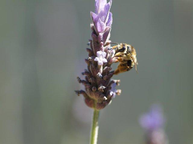 UE.- La Eurocámara pide reducir el uso de pesticidas y mejorar la investigación