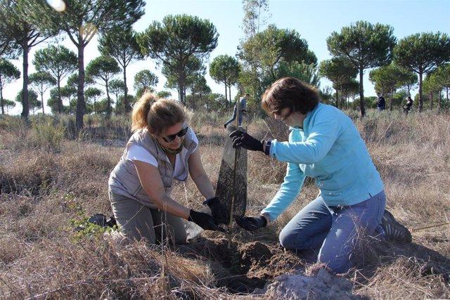 Voluntarios de Endesa plantan especies en el Arroyo de la Comba, en Doñana