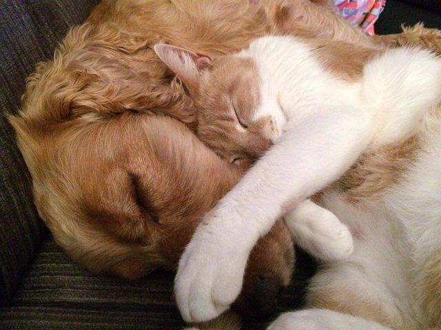 Perro y gato.