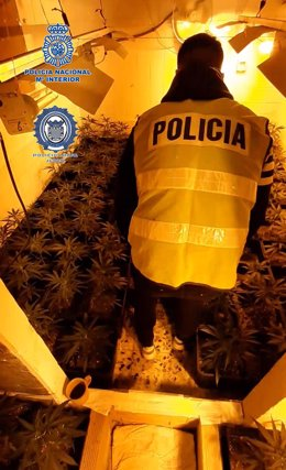 Nota De Prensa: Desmantelada En Jerez De La Frontera Una Plantación Indoor De Cannabis Sativa Ubicada En Una Vivienda Ocupada Ilegalmente
