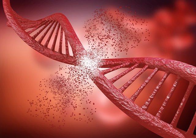 Científicos de la US identifican un nuevo mecanismo de reparación de roturas el ADN