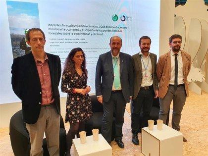C-LM propone cuantificar el valor económico de la fijación de CO2 en la gestión forestal