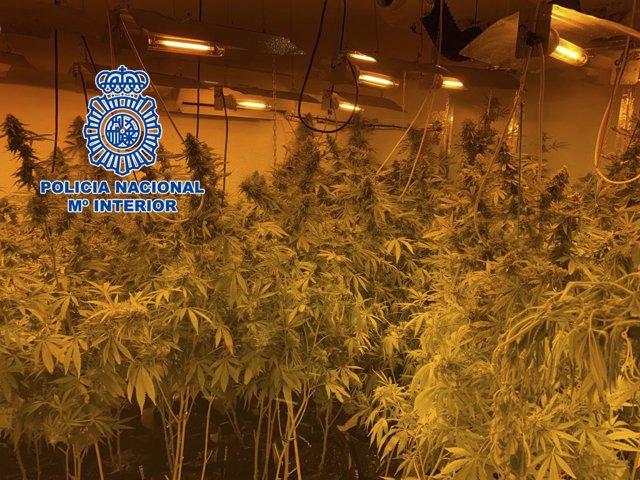 Una de las plantaciones de marihuana desmanteladas