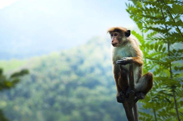 Mono en bosque tropical