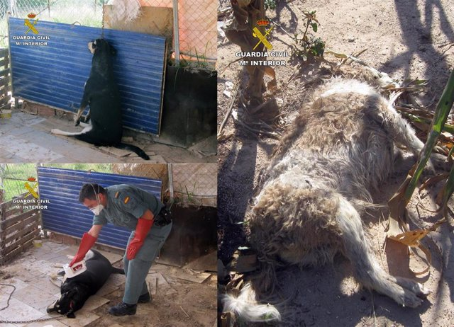 Imágenes de los canes asesinados