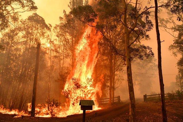Incendios en Nueva Gales del Sur