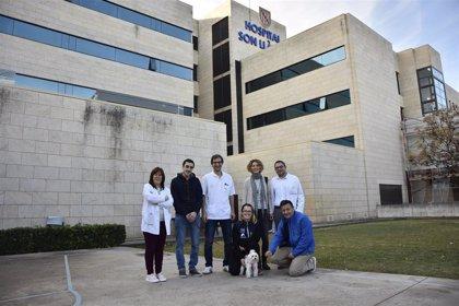 Los pacientes de la UCI de Son Llàtzer ya pueden recibir las visitas de sus animales de compañía