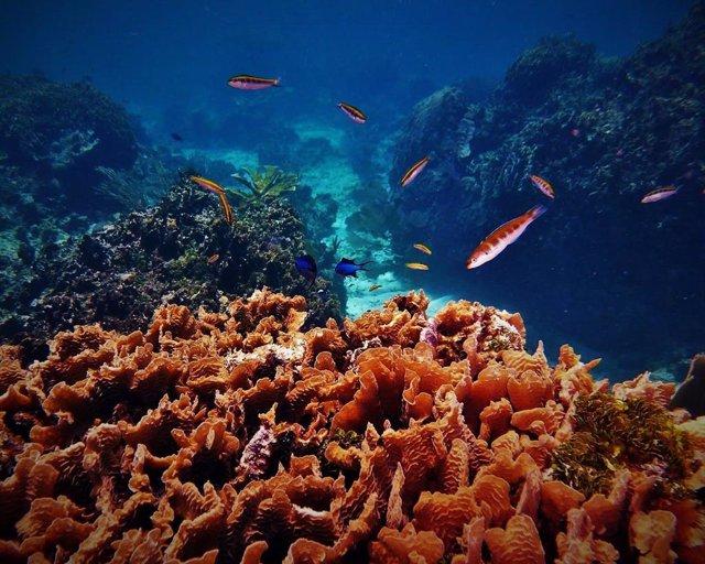 Corals a Roatán (Hondures)