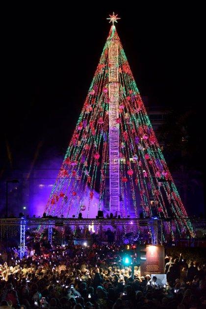 Más de 1.500 escolares de Murcia y pedanías visitarán el gran Árbol de la Navidad en las próximas semanas