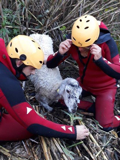 Rescatan a una oveja que se había caído por un barranco en Salt de Chella