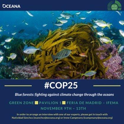 Oceana pide un plan de acción para la protección de los 'bosques azules'