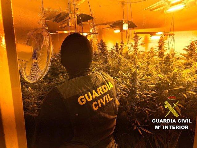 Almería.- Sucesos.- Dos detenidos acusados de cultivar 171 plantas de marihuana