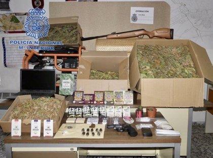 Detenidos los dos responsables de una plantación de marihuana en Yecla con 7 kg en plantas y cogollos