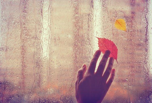 Triste fondo otoñal, mano toca ventana mojada.