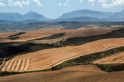 Cambios en circulación atmosférica amenazan la producción de alimentos