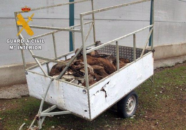 Sucesos.- Un ganadero se enfrenta a 18 meses de prisión por dejar morir de hambr