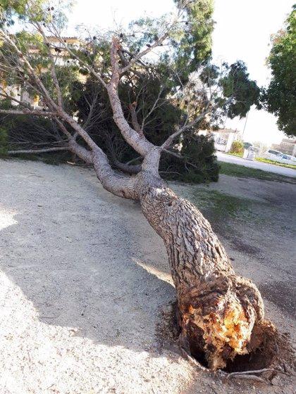 La brigada de Medio Ambiente de Marratxí realiza una quincena de intervenciones por el vendaval