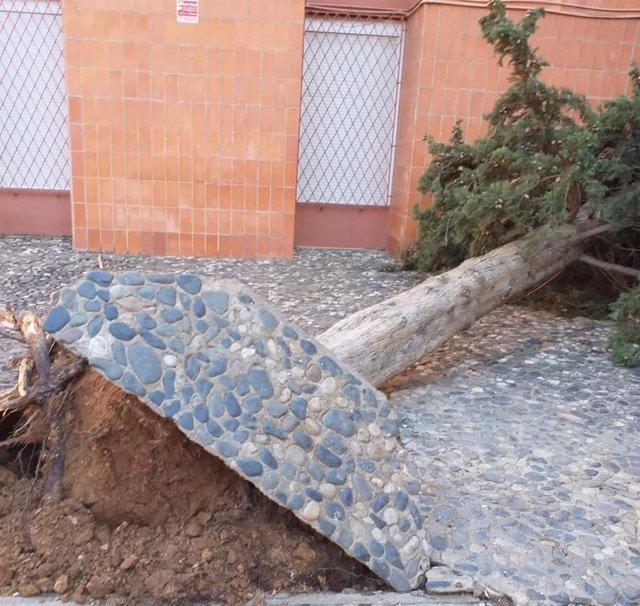 Un arbre caigut a Reus (Tarragona) a causa dels forts vents (arxiu).