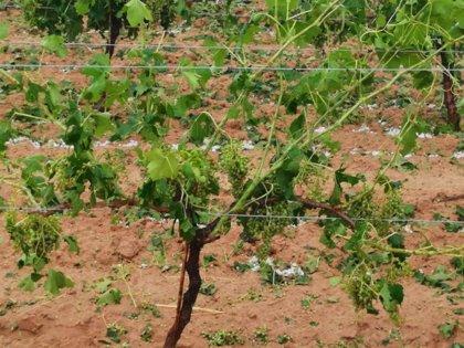 Los agricultores valencianos dejan de cultivar seis hectáreas cada día, según un informe de AVA-Asaja