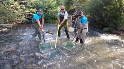 La Universidad de Córdoba participa en un proyecto para proteger a la anguila europea, especie en peligro de extinción