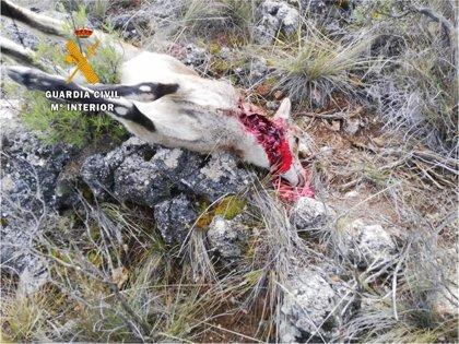 Investigado un acusado de cazar dos cabras sin autorización en un coto en El Pinar (Granada)
