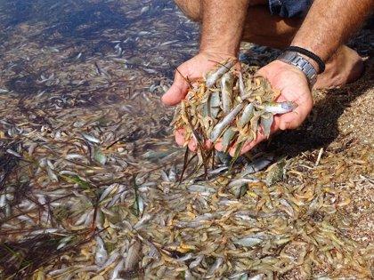 Investigadas 46 personas por delitos vinculados a la contaminación marina y al tráfico de residuos