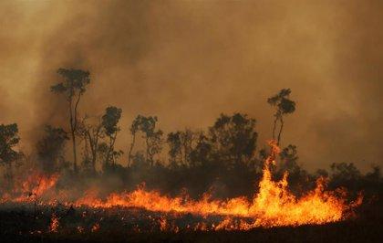 Las áreas deforestadas del Amazonas aumentan un 103% respecto a 2018 y suponen casi el tamaño de Puerto Rico