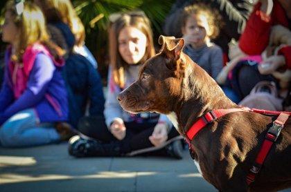 """El Desfile de perros abandonados AUPA - Bioparc logra """"finales felices"""" con nuevas familias para varios canes"""