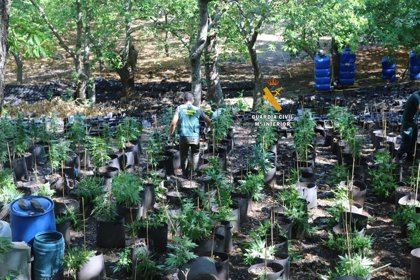 Cuatro detenidos tras desmantelar una red de cultivo de marihuana en Faraján (Málaga)