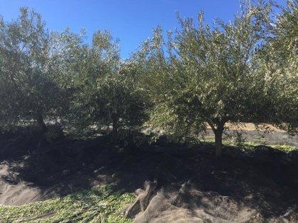 Detenido en Pozo Alcón (Jaén) por dejar en un centro de salud el cadáver de un inmigrante que trabajaba en su finca