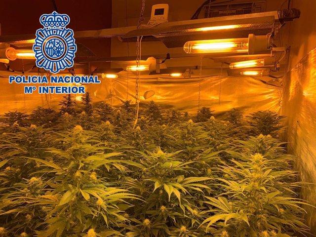 Plantación de marihuana localizada por la Policía Nacional en una vivienda de Almería