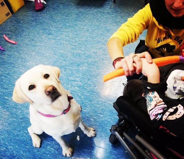 Porgrama de terapia asistida con perros de la asociación Biak Bat.