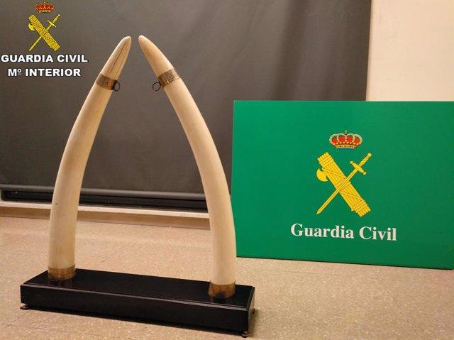 La Guàrdia Civil intervé dos ullals d'elefant a Sabadell (Barcelona)