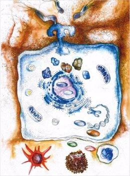 TLR5 se activa mediante la proteína de secreción tipo IV CagL de 'H. Pylori'. Esto conduce a una cascada de señales, que a su vez conduce a la creación de sustancias mensajeras en el núcleo de la célula. Esto atrae entonces a las células inmunitarias