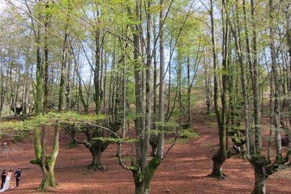 Rural.- El plazo de presentación de solicitudes de ayudas a la forestación lleva hasta el 22 de enero