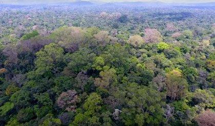La Amazonía brasileña registró cerca de 90.000 focos de incendio en 2019