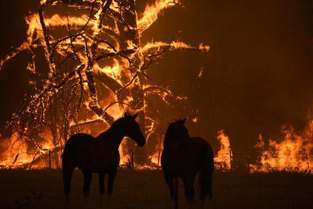 Un incendio forestal en el estado de Nueva Gales del Sur a finales de diciembre de 2019