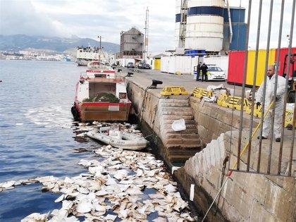 Fianza de 250.000 euros para el buque ganadero responsable del mayor vertido de fuel en 20 años en el Puerto de Ceuta