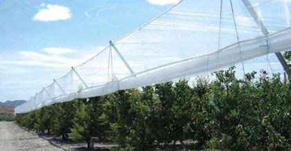 Condepols de Alcalá la Real aumenta su producción de mallas agrícolas y fabrica ya sacas de gran tamaño
