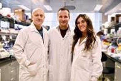 Un programa de 'desarme' de los neutrófilos evita que el sistema inmune se 'descontrole'