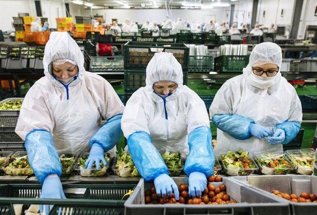 Empleadas en una planta de ensaladas listas para consumir