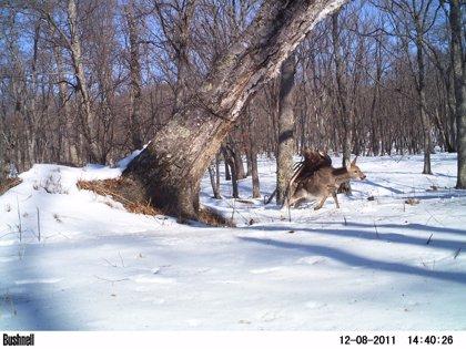 Wildlife Insights, la 'nube' online que ayuda a conservar la vida salvaje con fotos de 'cámaras trampa'