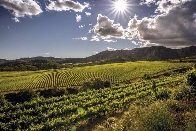 Economía.- La producción de vino y mosto alcanzó los 37,2 millones de hectólitro