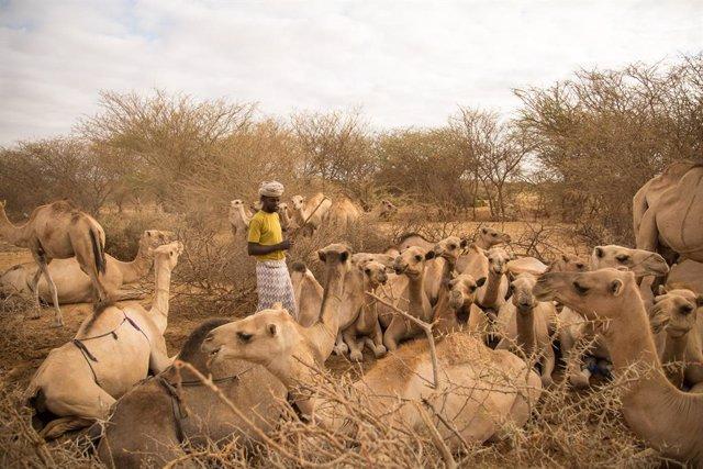 """África.- El cambio climático y la violencia deja a millones de personas """"atrapad"""